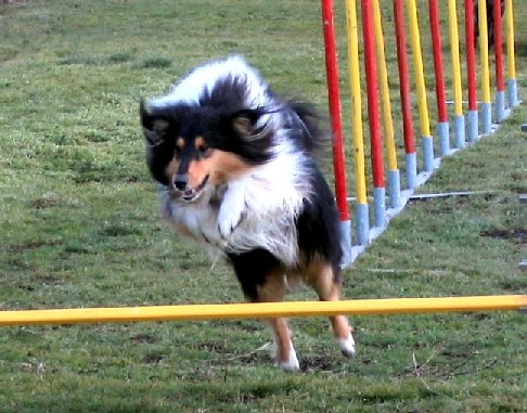 album/photo-portee-d-2005-03-05-dreamy-agility-4.jpg